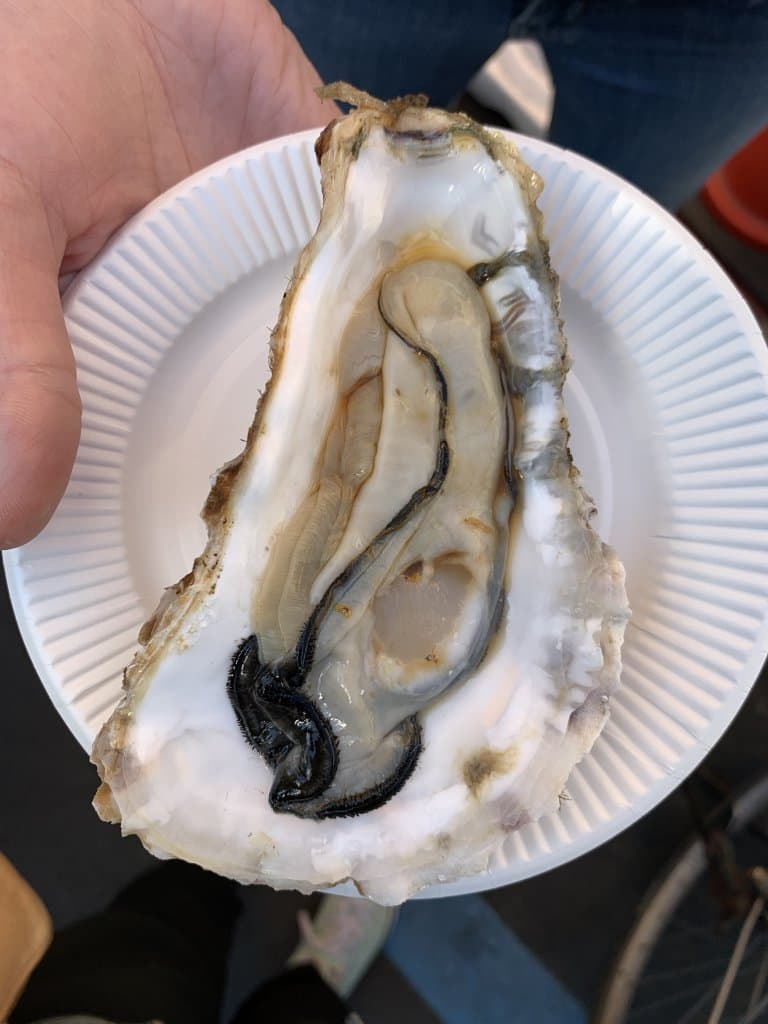 A large oyster in the shell on a white paper plate